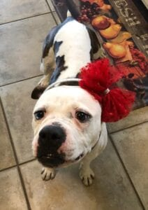 Adoptable_Shelby3